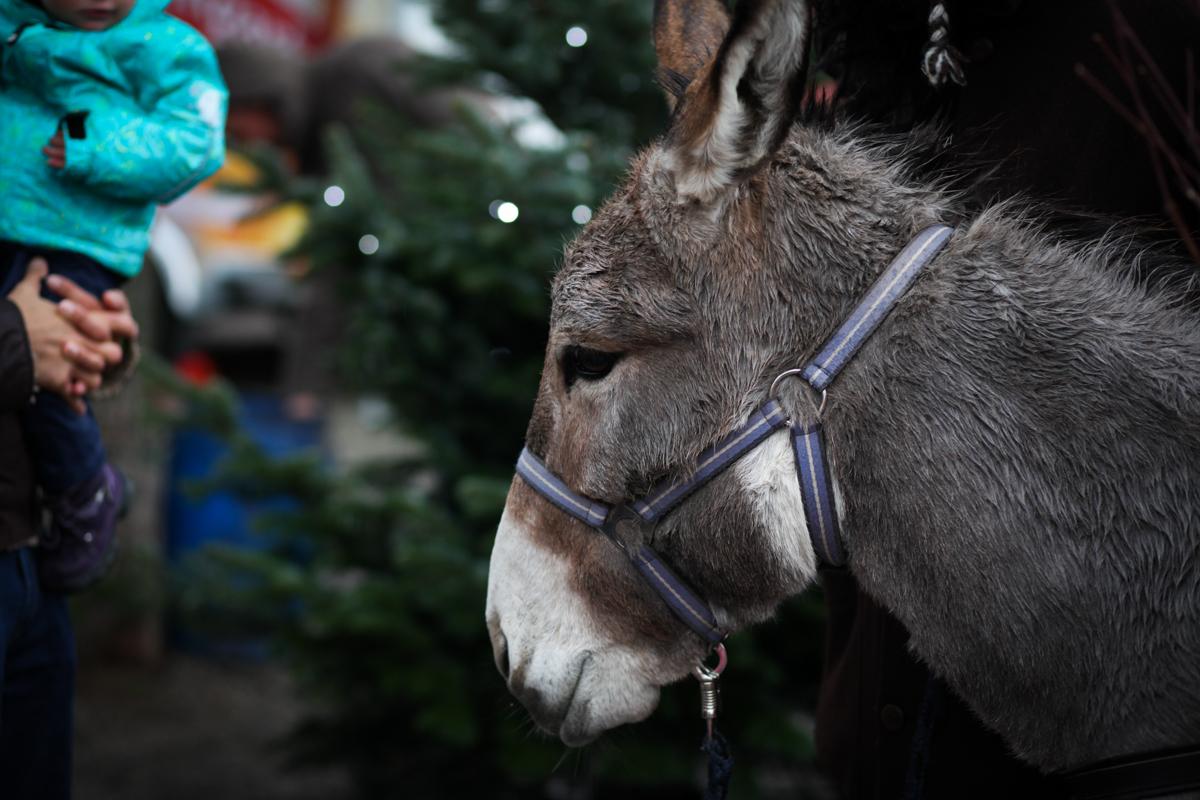 Weihnachtsmarkt_Raiffeisen_schöniaugeblick_fotografie_ostschweiz_weihnachtsmarkt_Markt_sterne_advent-2